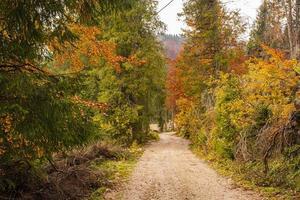 Path in autumn woods photo
