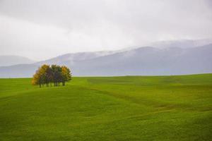 árboles en un campo foto