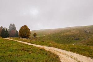 camino de tierra y arboles foto