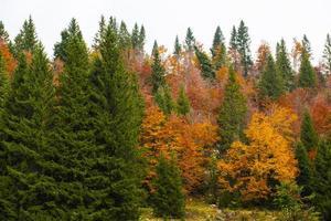 otoño y árboles verdes foto