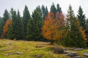 árboles otoñales y rocas foto