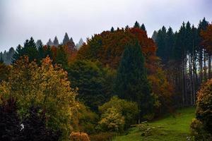 bosque de arboles de otoño foto