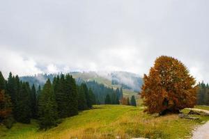 vista de otoño brumoso foto