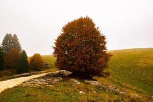 prado de otoño y camino foto