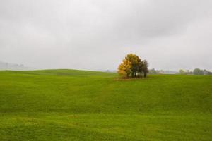 árboles y campo verde foto