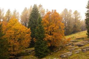 árboles verdes y dorados foto