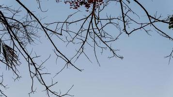 Photo of tree branches that are quite dense with a backdrop of a very clear sky