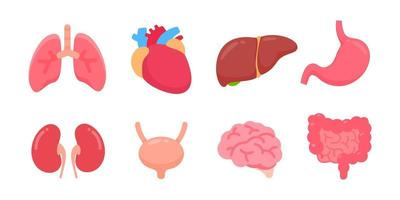 Vector human organs Human body internal parts Concept of study of body systems