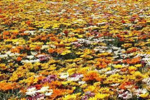 Flower pattern multicolor photo