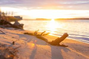 Sunset river beach view with snag photo