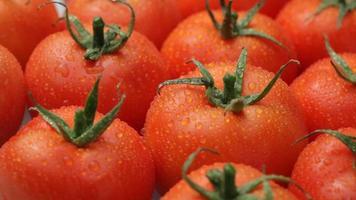 fundo de tomates frescos video