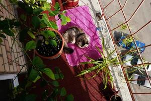 An open summer terrace with plants and a cat on a rug photo