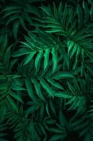 green plant leaves in the nature photo