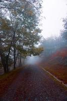 road in the mountain with fog in autumn season photo