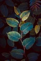 blue plant leaves in spring season photo
