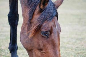 beautiful brown horse portrait photo