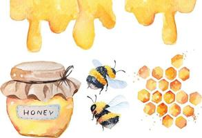 bees and honey watercolor vector