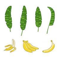 Bunch of bananas and banana leaves vector