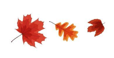 Colorful Vivid Autumn Falling Leaves vector