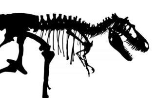 Tyrannosaurus Rex skeleton  Silhouette vector  side view