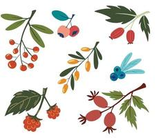 Collection with colorful doodle berry branches and leaves Buckthorn blueberry rosehip currant rowanberry Vegan farm detox natural food concept Summer food Vector illustration flat design
