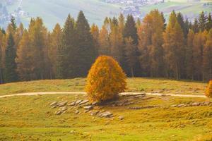 vista del bosque de otoño foto