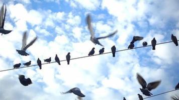 foto em câmera lenta de pombos da cidade voando em filmagens de pólo de fios elétricos video