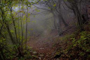 Dark foggy woods photo