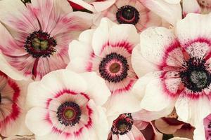 Pink elegant flower photo
