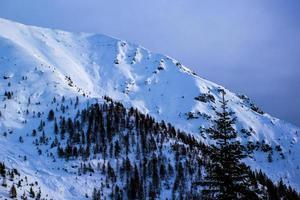 Snowy mountain and pines photo