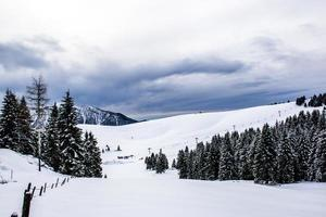 Snowy landscape with pine trees photo