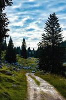camino a través de un paisaje de montaña. foto