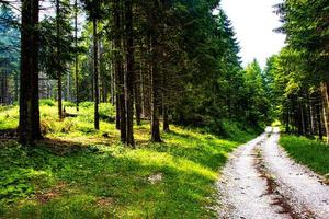 Road through a pine forest photo