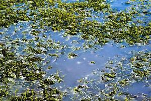 vegetación en el agua foto