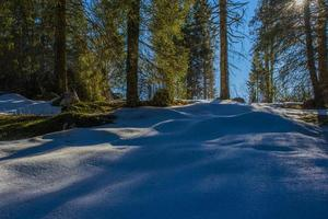 Snow and forest photo