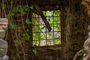 ventana vieja y vegetacion foto