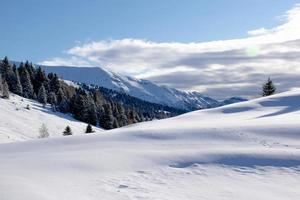 Snowy landscape with pine photo