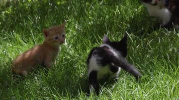 Curious Cute Little Cats Playing On The Grass video