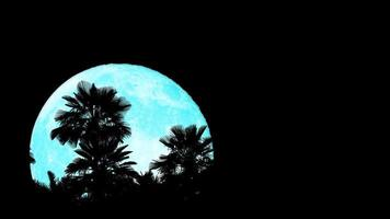 super blauwe maan opkomst terug silhouet top kokospalmen aan de nachtelijke hemel time-lapse video