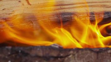 Wood burning in campfire. Shot on RED EPIC for high quality 4K, UHD, Ultra HD resolution. video