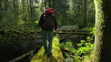 Backpacker marchant sur un arbre tombé, Oregon video