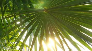 o sol brilha através das folhas de palmeira tropical video