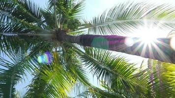 ramos de palmeira e sol video