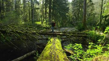 Backpacker prenant des photos en forêt, Oregon video
