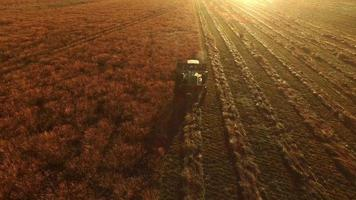 Aerial shot of combine in field at sunrise video
