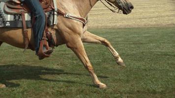 Horse running in super slow motion, shot on the Phantom Flex 4K at 1000fps video