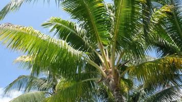 palmeira balançando ao vento video