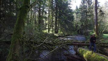 randonneur marchant en forêt video