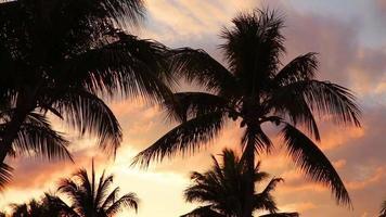 palmiers et coucher de soleil au complexe tropical video