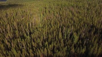 Aerial view of Oregon forest video